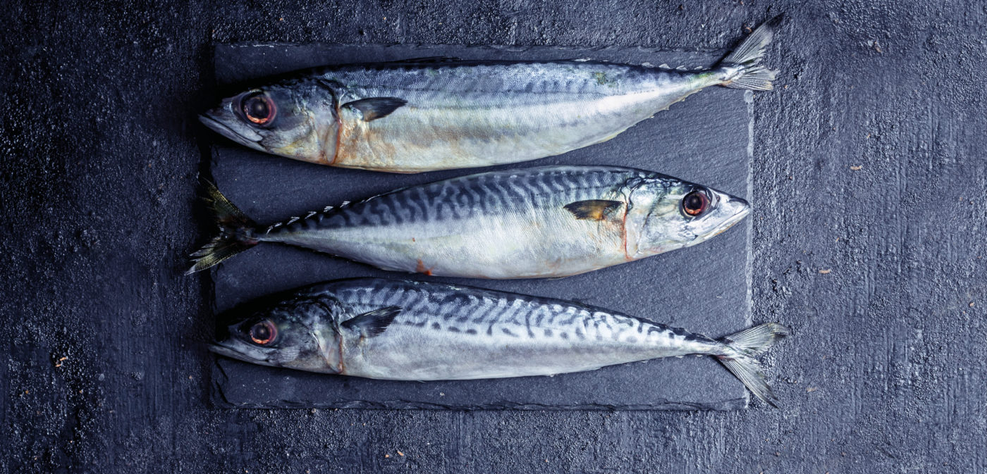 Three mackerel on a slate. Two face left, one faces right