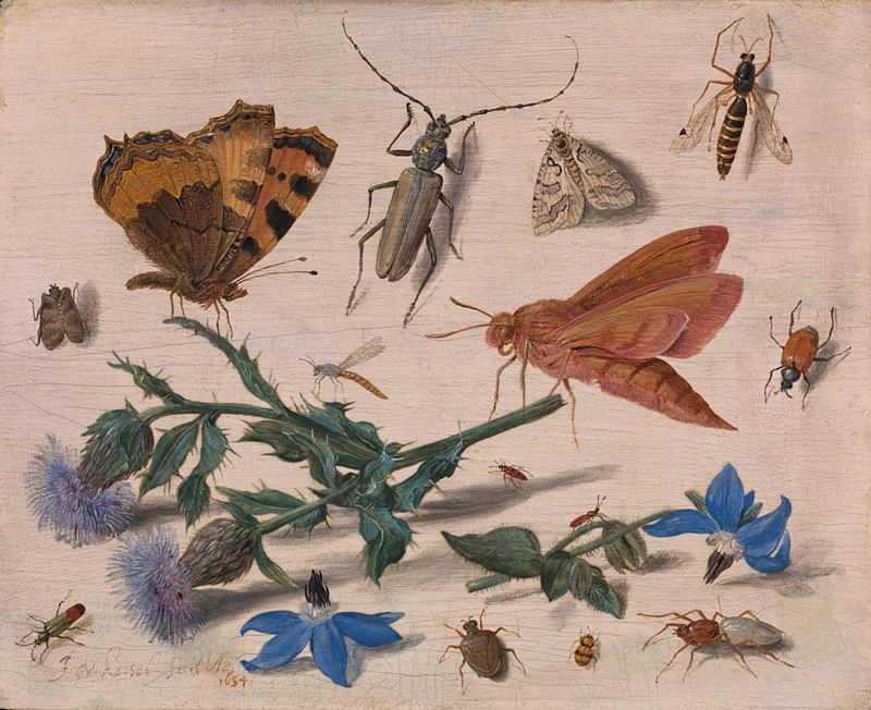 Jan van Kessel the Elder, 'Insects with Creeping Thistle and Borage', 1654
