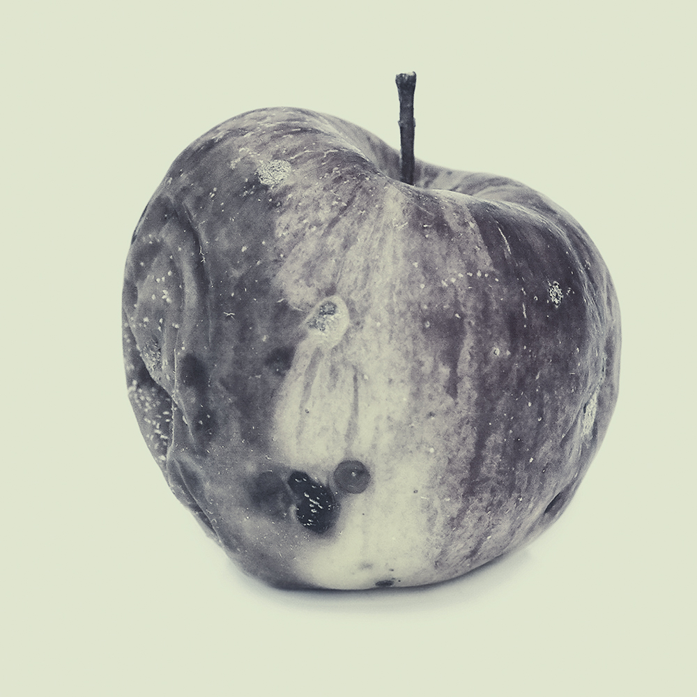 Sepia image of a rotting apple.